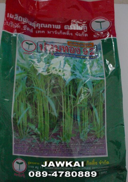 ผักบุ้งจีน พันธุ์ปทุมทอง92 ตราใบคู่